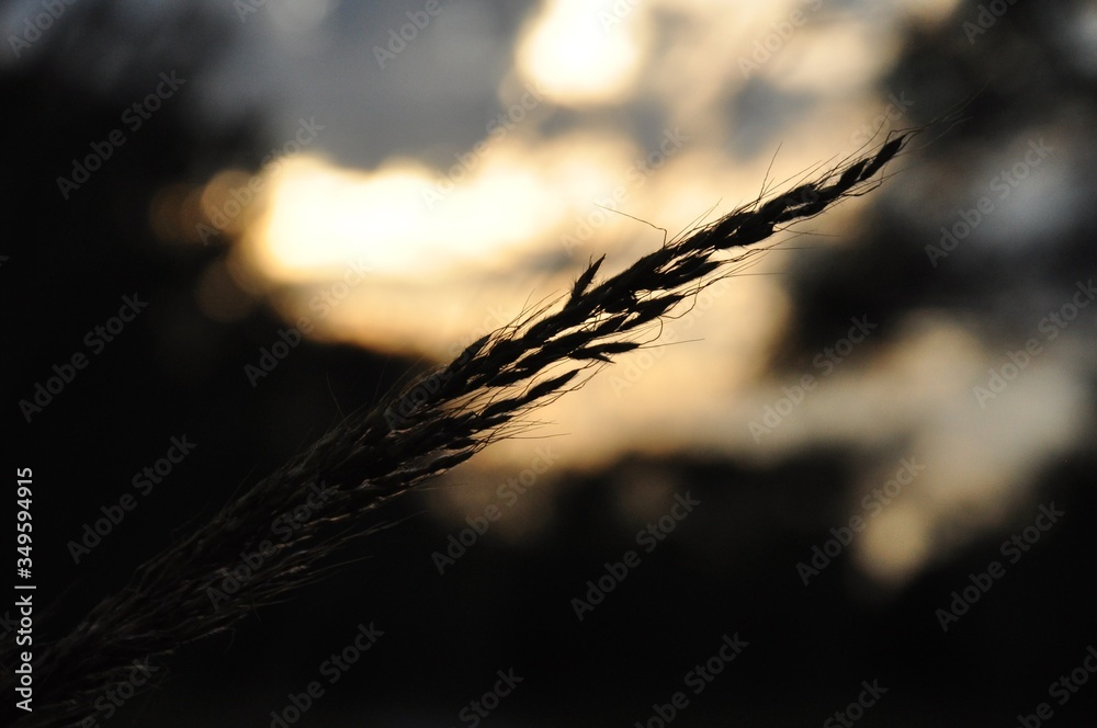 Close-up Of Silhouette Plant During Sunset
