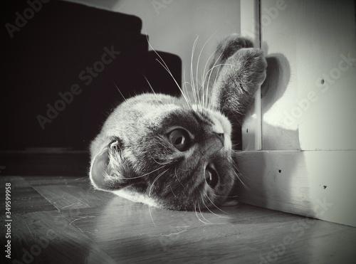 Close-up Of Cat At Home Fototapeta