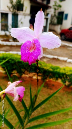 Fototapety, obrazy: Close-up Of Pink Flowers