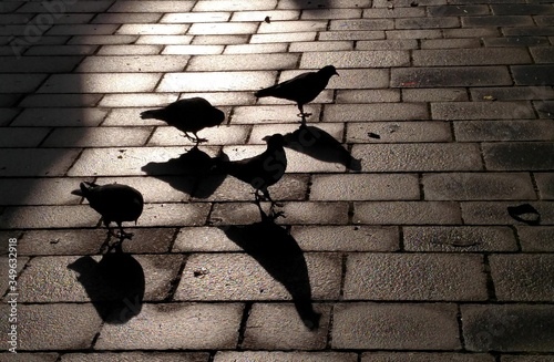Fotografia High Angle View Of Silhouette Birds Perching On Paving Stone Footpath