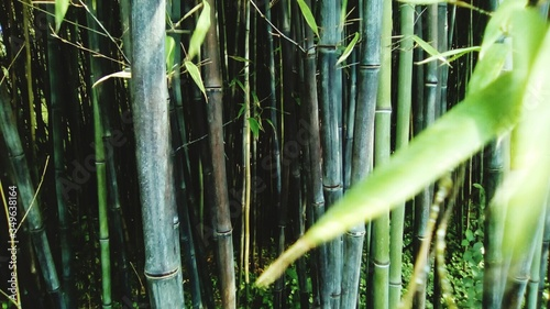 Tableau sur Toile Bamboos Growing On Field