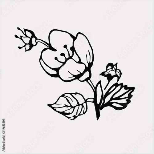 Photo Flowering branch of jasmine pattern. Black white graphics.
