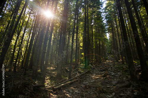 highland rocky forest pine trees local landscape scenic view with sun light glare