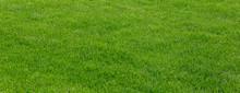 Background Of Green Grass Fiel...