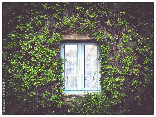 Foto Close-up Of Creepers Along Closed Window