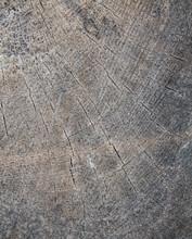 Old Gray Tree Bark 12
