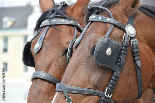 Photo Close-up Of Horses With Blinders