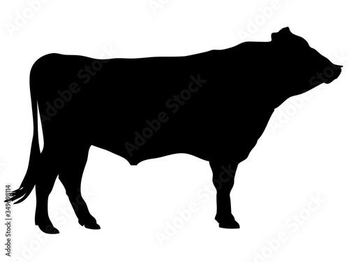 黒毛和牛シルエット_1 Wallpaper Mural