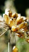 Close-up Of Seedpod On Plant