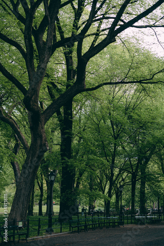 фотография New York Central Park panorama