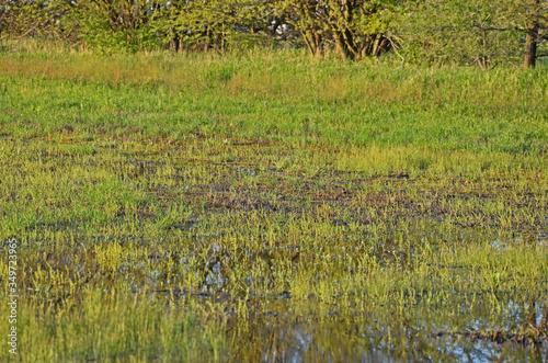 marshland Fototapeta
