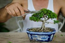 Man Pruning A Bonsai Whith Sci...