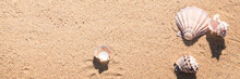 Sea Shell On Sand Photographed From Above, Hot Summer Day On The Beach, Sunny Tropical Beach Background