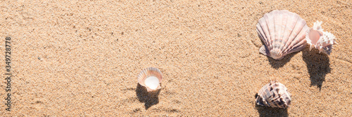 Obraz na plátně Sea shell on sand photographed from above, hot summer day on the beach, sunny tr