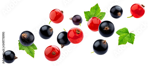 Fototapeta Red and black currant isolated on white background with clipping path