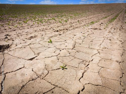 Photo terre agricole aride en été
