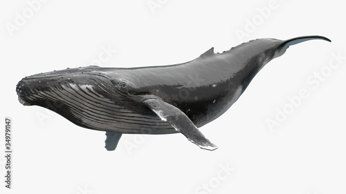 Obraz na plátně 3D Render of Humpback Whale, Humpback whale on an isolated, 3r rendering