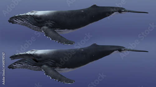 Fotografia, Obraz 3D Render of Humpback Whale, Humpback whale on an isolated, 3r rendering