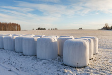 Wrapped White Straw Bales On F...