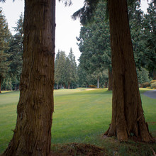 Golf Through The Pines