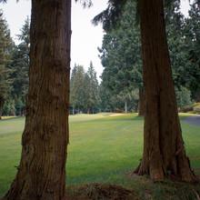 Golf Through The Pines