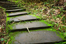 Greenery Jungle With Green Moss And Mushrooms Cover And Growing On A Stairs In Tropical Rainforest