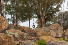 Tyre (tire) Swing Hanging From An Australian Gum Tree With A Rock Garden.