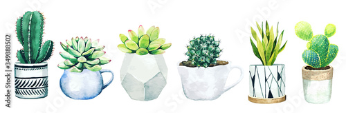 Fotografiet Set of six potted cactus plants and succulents, hand drawn vector