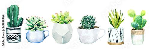 Fotografie, Obraz Set of six potted cactus plants and succulents, hand drawn vector