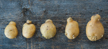 Ugly Vegetables, Deformed Potatoes On A Rustic Wooden Background