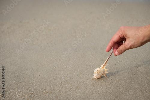 Obraz na plátně Cropped Hand Picking Seashell On Sand