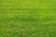 Grüne Sommerwiese