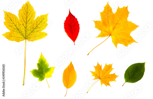 Fototapety, obrazy: Real autumn leaves lying in white background. Seasonal photo. Yellow, red and green colours with texture. November postcard.