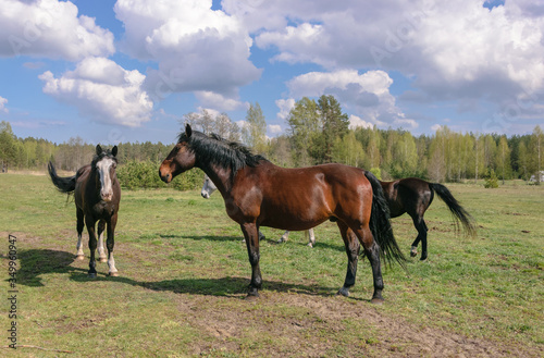 Valokuva Group of horses graze in the meadow.