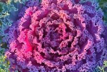 Morning Hoar Frost On Purple L...