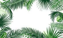 Frame Of Tropical Foliage. Bor...