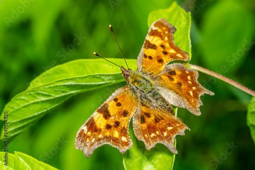 Fotomural butterfly 130