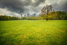Central Park At Rainy Day, New...