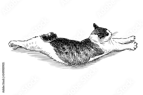 Papel de parede Sketch of a lying curved domestic cat