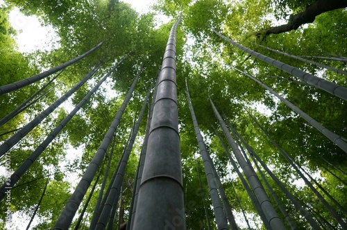 Papel de parede Low Angle View Of Bamboos