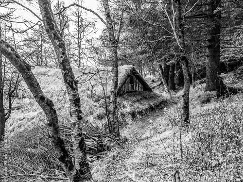 Fototapeta Bare Trees In Forest During Winter obraz na płótnie