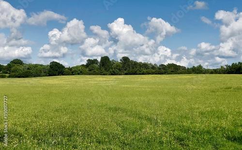 Fotografia, Obraz Scenic View Of Field Against Sky