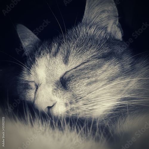 Cuadros en Lienzo Close-up Of Cat Sleeping