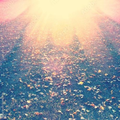 Cuadros en Lienzo Sunlight Falling On Grass At Park