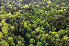 Aerial Shot Of Summer Forest L...