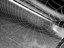 Full Frame Shot Of Spider Web