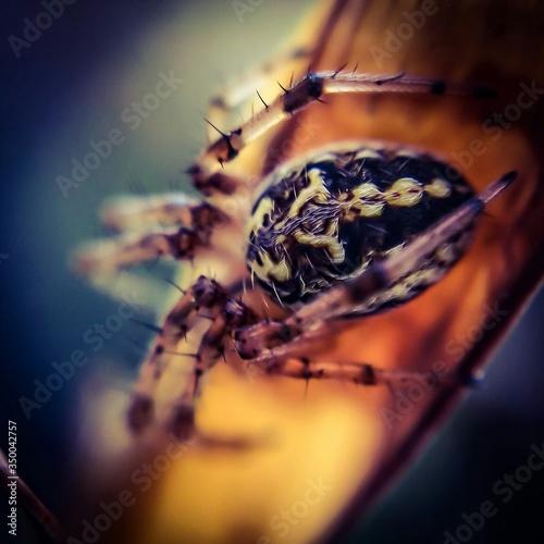 Fotografija Macro Shot Of Spider