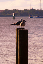 Two Seagulls Standing On Poles