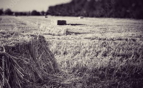 Obraz na płótnie Hay Bales On Field