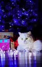 Portrait Of Cat Under Illuminated Christmas Tree